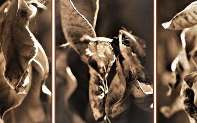 Sepia Progressions of Form by Allison Palmer